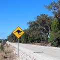 澳大利亚工作签证有几种?常见工作签申请指南