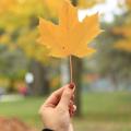 加拿大的房產:買房避稅要當心!