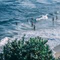 去澳洲留學:出現這7種情況,你就會被遣返!