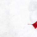 避雷!申请加拿大留学移民的一些小贴士!