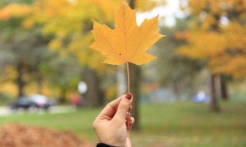 加拿大阿省雇主担保移民