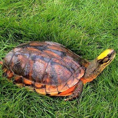 生动和乌龟